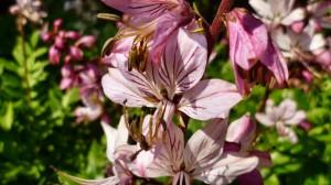 19.5.2012 Orchideeen (37)