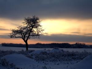 6.1. Winter 2010 094