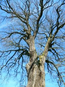 http://www.monumentaltrees.com/de/benutzer/Manni57/
