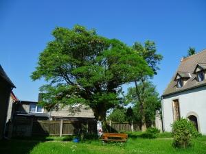 22.5.2014 Donnerstag Alte Bäume (8)
